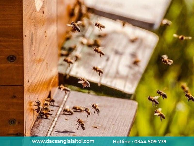 yếu tố ảnh hưởng đến mật ong