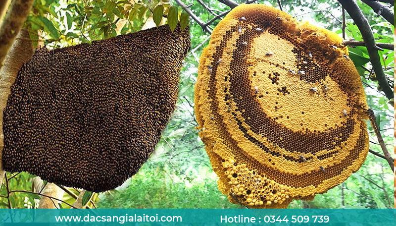 Mật ong loại nào tốt - Mật ong rừng
