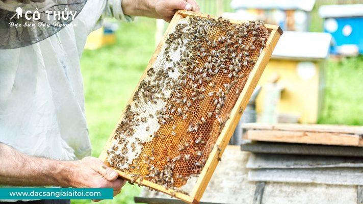 Định hướng của mật ong rừng Tây Nguyên Cô Thủy