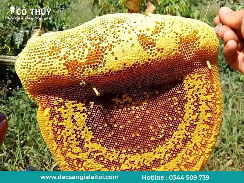 Mật ong rừng thật có đóng đường không?