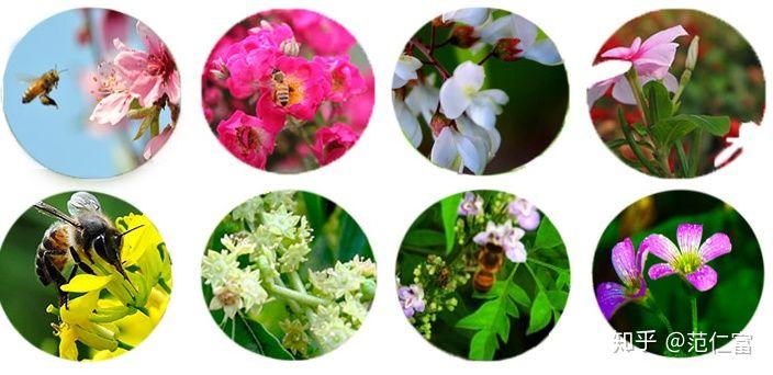 Mật ong thật đóng đường do nguồn mật hoa