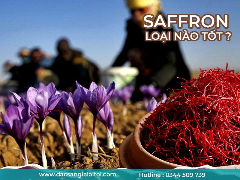 saffron loại nào tốt - Saffron Badiee